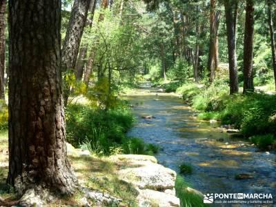 Pesquerías Reales - Monte de Valsaín; trekking y aventura; pedriza;gratis senderismo